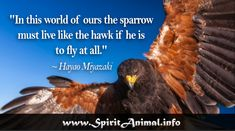 """Inspirational Hawk Quotes """"Anyone who has ever stopped to watch a hawk in flight will know that this is one of the natural world's most elegant phenomena. Hawk Spirit Animal, Find Your Spirit Animal, In This World, Quotes, Healer, Mother Nature, Animals, Poems, Birds"""