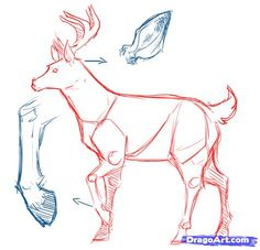 How to Draw Deer, Drawing Deer, Step by Step, forest animals ...