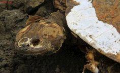 Como o açude mais antigo do Brasil virou um 'cemitério de cágados'