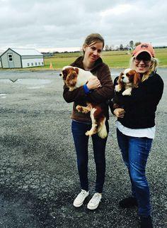 Puppy Mill Pups // cavalierrescueusa.org #animaladvocacy #rescue #cavalierkingcharlesspaniels #puppymills #puppymillauctions King Charles Spaniel, Cavalier King Charles, Cavalier Rescue, Puppy Mills, Spaniels, Buckets, Doggies, Hipster, Puppies