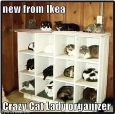 Funny Cat Humor The Crazy Cat Lady Organizer Refrigerator Magnet ...