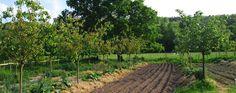 la ferme Vineyard, Outdoor, Gardens, Agriculture, Farm Gate, Backyard Farming, Animaux, Outdoors, Vine Yard