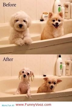 So true!     Cool Before And After Shampoo - funny pets
