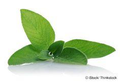 Beneficios Salvia