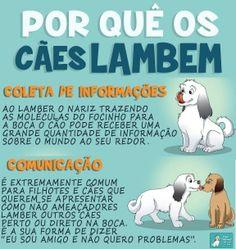 Mais dicas! :) #cachorros