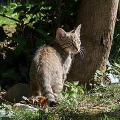 Cats, Animals, Feral Cats, Gatos, Animales, Kitty Cats, Animaux, Animal Memes, Cat Breeds