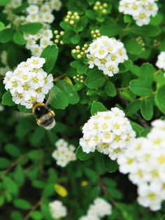 My little busy bee - 2015