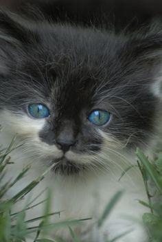 A Kittens Innocents by martintinaz.deviantart.com on @deviantART