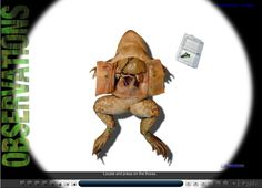 Free Homeschool Science: Virtual Frog Dissection