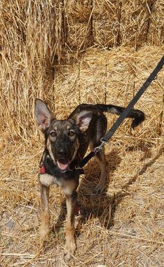 Adopta a Nala ( Mestizo ) - #adopta #perros