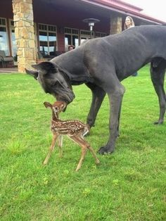 Dog Breeds Facts and Information: 5 Best and unusual friends of dogs