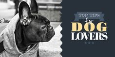 Blog header template - Edit online in Easil: Top tips for dog lovers