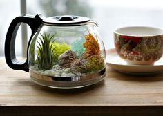Coffee Pot Planter http://www.rodalesorganiclife.com/garden/6-crazy-cool-terrariums/coffee-pot-planter