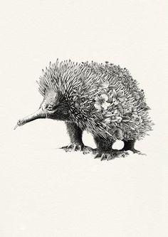 Echidna - Giclée Print (NEW!) – Marini Ferlazzo - Art for Wildlife Animal Sketches, Animal Drawings, Australian Tattoo, Native Tattoos, Aboriginal Art, Aboriginal Tattoo, Echidna, Guache, Australian Animals