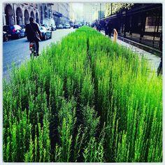 Ce serait chouette Paris avec plus de vert. Non ? Le #lin s'expose Place des Vosges.