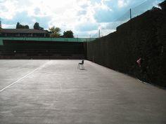 網球場的路上。toward the tennis court: 「網球場的路上」攝影徵件 - 作品077