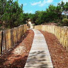 Route du paradis épisode 1... #mimizan  #mimizanplage  #landes  #chemindubonheur
