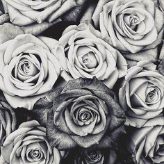 Pretty Black and White Roses Bouquet of Flowers Computer Sleeve Photo Rose, Black And White Roses, Black Flowers, White Rose Bouquet, Images Vintage, Buy Roses, Flower Images, Flower Photos, Love Is Free