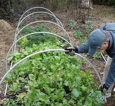 How To Make A Row Cover Hoop To Protect Your Veggies From Frost And To