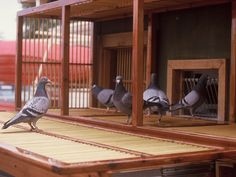 Our pigeon coop #Pigeonexpress #Photography