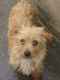 Seeing Eye Dogs Adoption Illinois