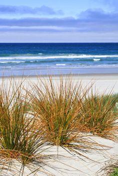 "llbwwb: "" Victory Beach, Otago Peninsula, New Zealand, 2010 (by Célia Mendes Photography) "" Sea And Ocean, Ocean Beach, Ocean Waves, Beach Grass, Beach Waves, Ocean Scenes, Beach Scenes, I Love The Beach, Beach Art"