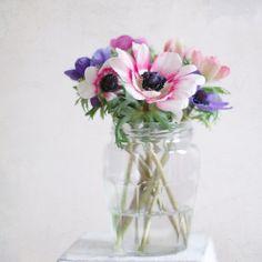 anemone in a jar...