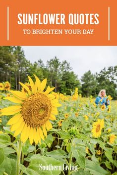 From short and sweet to inspirational and meaningful, these sunflower quotes will brighten even the dreariest day. #happyquotes #quotesaboutsunflowers #inspirationalquotes #southernliving Sunflower Wreaths, Sunflower Fields, Friends Are Like, True Friends, Sweet Quotes, Happy Quotes, Sunflower Quotes, Facing The Sun, Southern Sayings