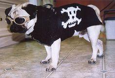Skull and Crossbones Dog Coat pattern by Ellen Mallett