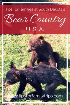 Tips for families at South Dakota's Bear Country U.S.A. It's on the way to Mount Rushmore from Rapid City!   tipsforfamilytrips.com   Black Hills   family vacation   road trip ideas   summer vacation   travel   bear cubs