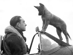 A fighter pilot of one of the Czechoslovak Spitfire squadrons in the RAF and his dog, Sally, a German Shepherd mix, are meeting after a bombing mission.