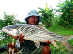 Good size Mrigal caught from new lake near Bangkok by Jeab.