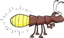 Image result for świetliki owady rysunek