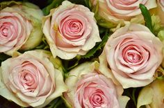 Everything Pink Trends Everything Pink, White Roses, About Me Blog, Flowers, Top Ten, Authors, Tuesday, Trends, Books