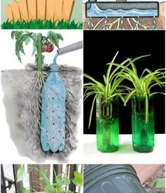 Clever Self Watering Systems - Green Leaf Tips Garden Weeds, Succulents Garden, Garden Planters, Tractor Tire Pond, Companion Planting Guide, Self Watering Containers, Natural Ecosystem, Bulb Flowers, Milk Jug