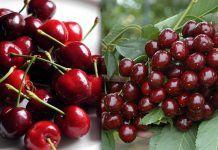 Κεράσια κατά της αϋπνίας, της πίεσης, των ρευματικών πόνων και πολλά άλλα Cherry, Fruit, Food, Essen, Meals, Prunus, Yemek, Eten