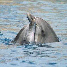 Tag someone in your life that needs a hug today! 🐬Dolphins are very caring creatures who often spend time tending to the sick, the old, and…