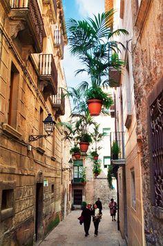 Temps de Flors a Girona: decoració floral al carrer Alemanys