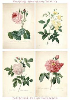 Wings of Whimsy: Redoute Belles Fleurs Sheet No 3 of 4 #vintage #ephemera #freebie #printable #redoute #roses