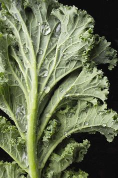 10 Equally Healthy Eating Alternatives to Kale