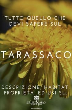 Descrizione, Storia, Habitat, Uso, Proprietà e Benefici del TARASSACO. Scopri tutto quello che c'è da sapere su questa erba officinale. #tarassaco #erbeofficinali # proprietàdelleerbe #rimedinaturali #utilizzidelleerbe #botanica Taraxacum Officinale, Salvia, Feel Good, The Cure, Medicine, Alternative, Herbs, Health, Garden