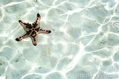 Live Starfish Underwater by Shariff Che' Lah, via Dreamstime