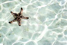 Live Starfish Underwater by Shariff Che' Lah, via Dreamstime
