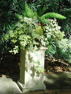 Love the garden urn on a pillar for a formal look. Asparagus fern & ivy in mossy container.