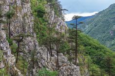 DOWNLOAD :: https://jquery-css.de/article-itmid-1008198524i.html ... Tasnei Gorge, Romania ...  baile herculane, cerna, clouds, domogled, forest, gorge, green, landscape, mountain, national, nature, outdoor, park, pine, rain, rocks, rocky, romania, tasnei, tree  ... Templates, Textures, Stock Photography, Creative Design, Infographics, Vectors, Print, Webdesign, Web Elements, Graphics, Wordpress Themes, eCommerce ... DOWNLOAD :: https://jquery-css.de/article-itmid-1008198524i.html