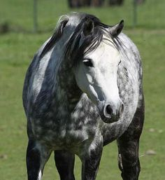 welsh pony love those ribbons equestrian not a hobby not a rh pinterest com