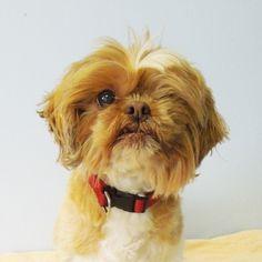 Adopt a Shelter Pet