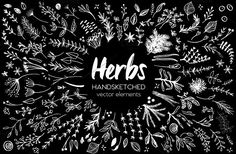 Herbs HandSketched Vector Elements by Coral Antler Creative on @Graphicsauthor