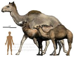 camelops del pleistoceno - Google Search