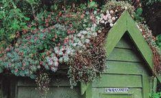 roof succulents!